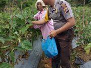Sambang Warga, Bhabinkamtibmas Polsek Tepah Selatan Panen Terong Di.